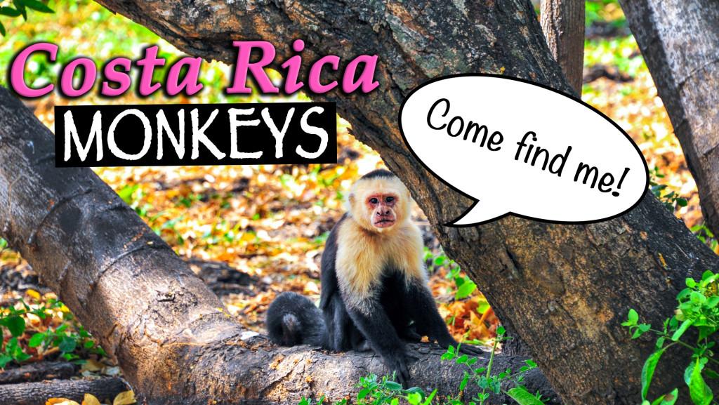 Costa Rica Monkeys White-faced Capuchin Palo Verde National Park - 0004-2