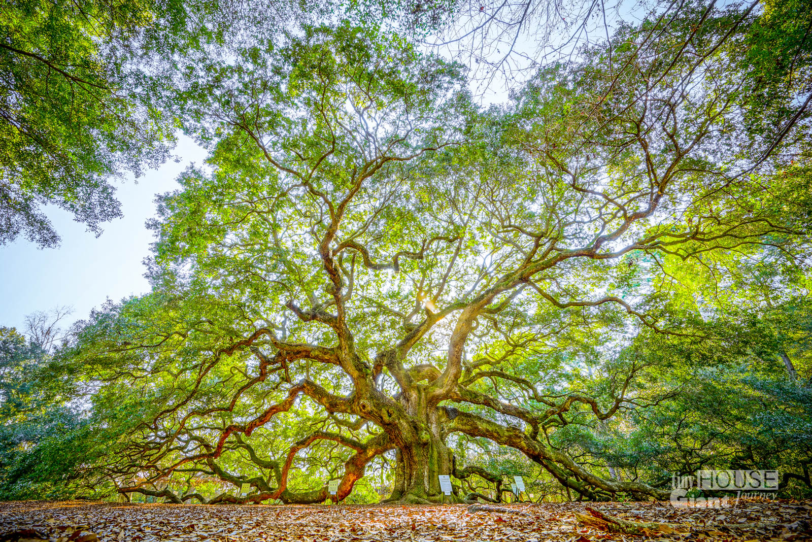 THGJ Angel Oak - 0002