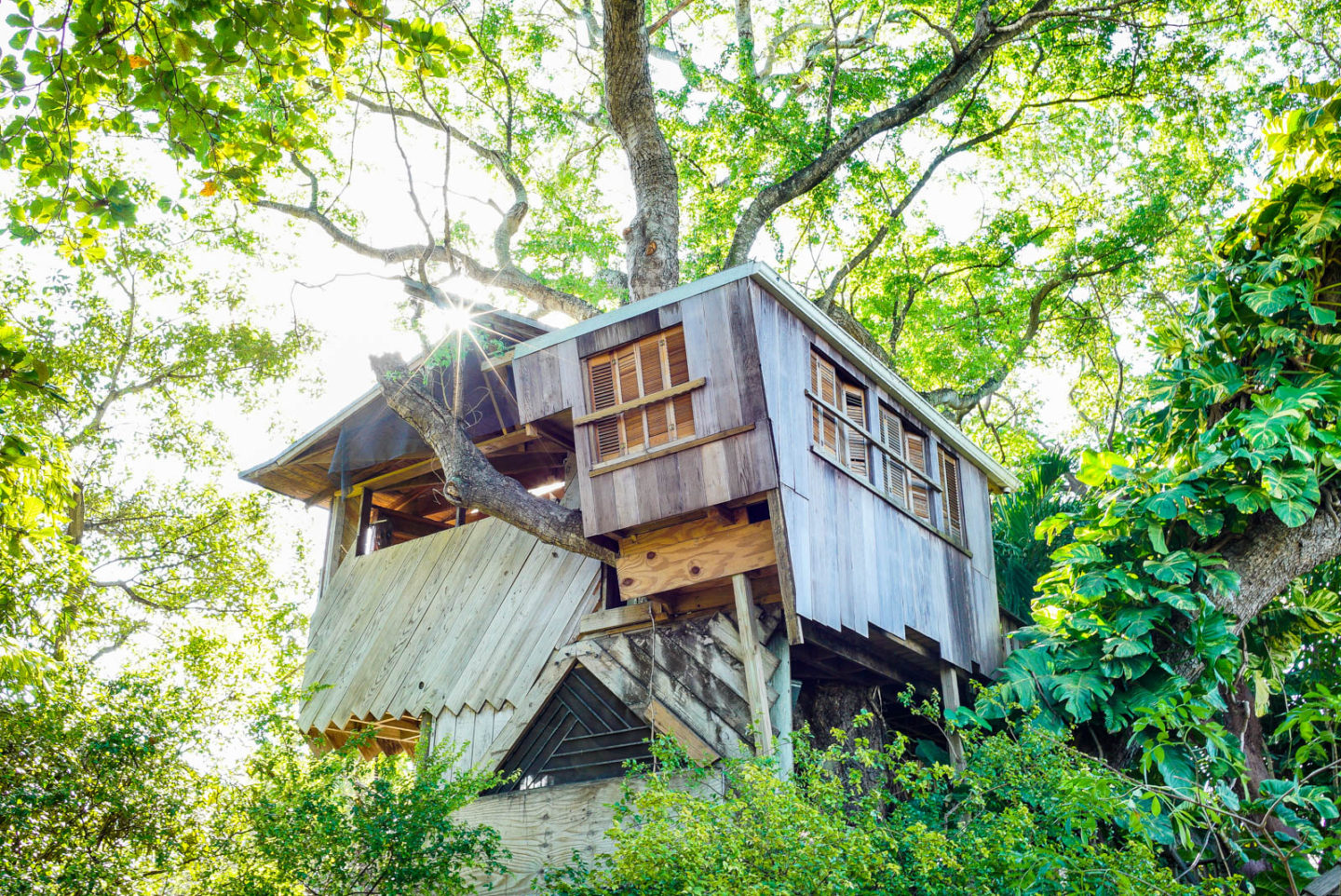 Miami, FL: Tree House Accommodations