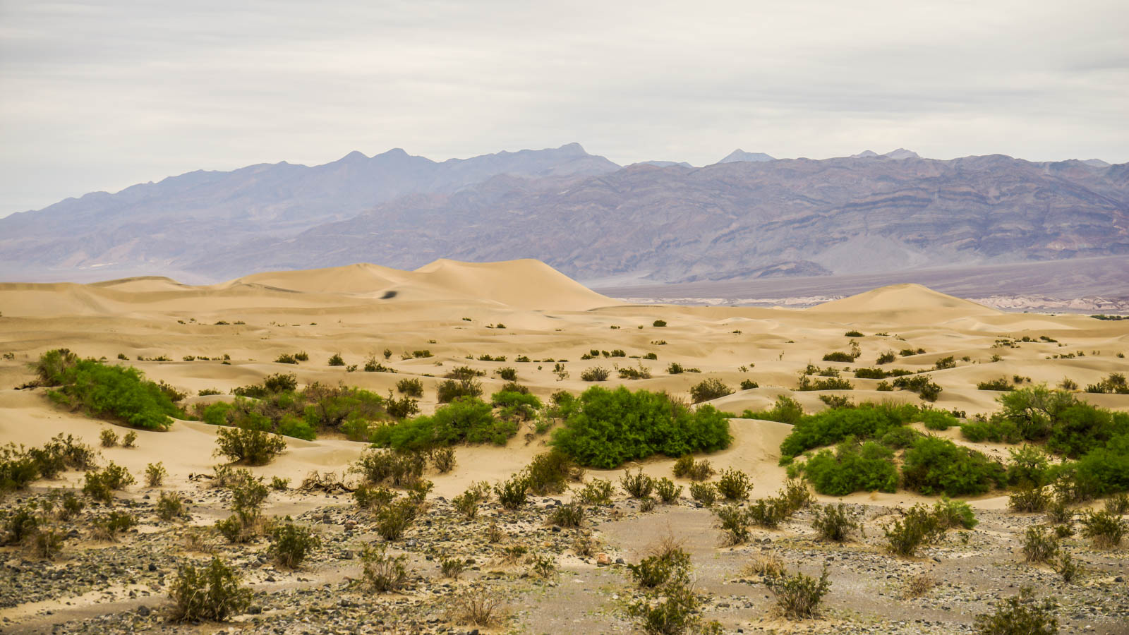 Death Valley Sand Dunes - 0001