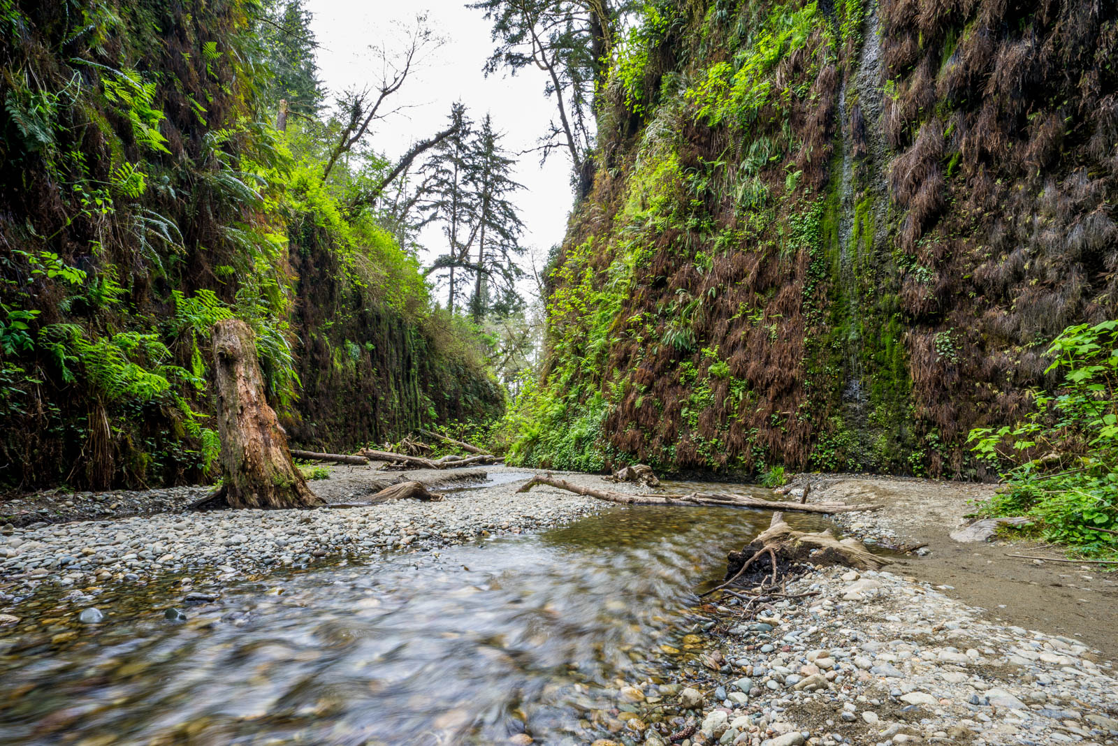 Fern Canyon Hike - 0004