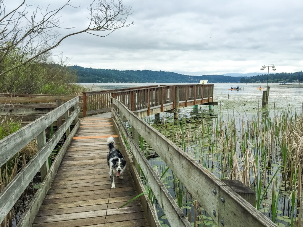 Marymoor Birding Trail