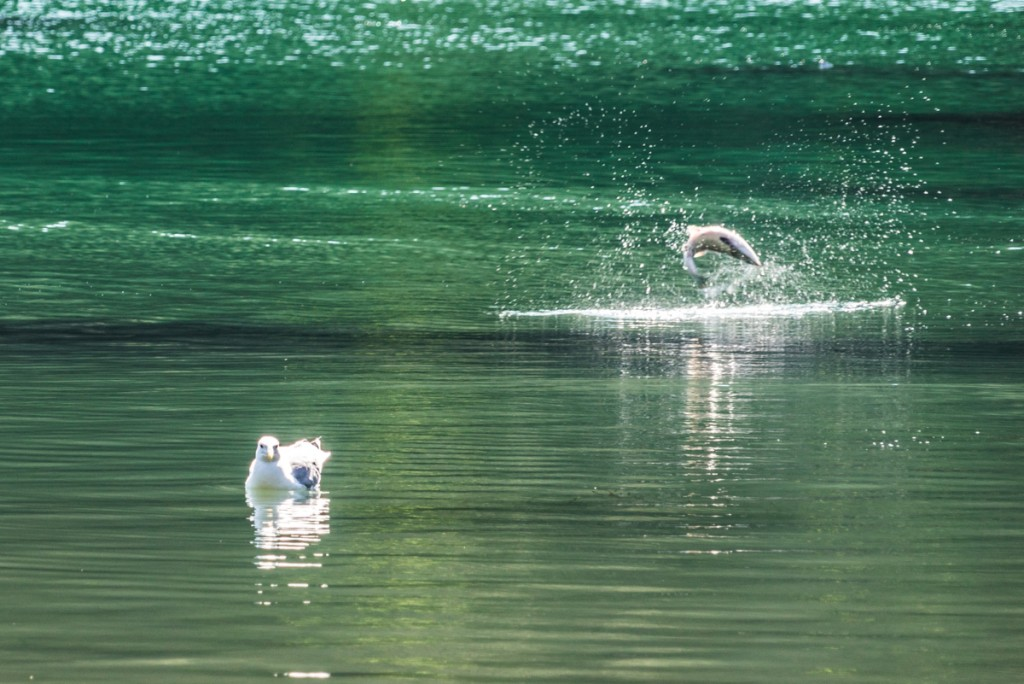 Salmon Fishing Trip - 0013