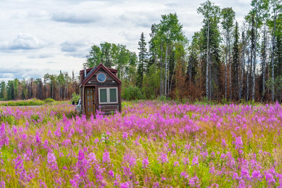 THGJ Alaska Fireweed – 0002