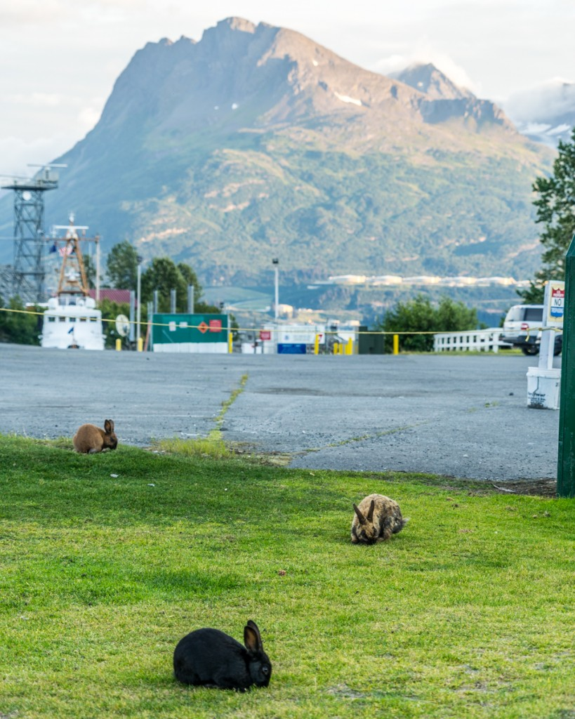 Valdez Bunnies - 0002