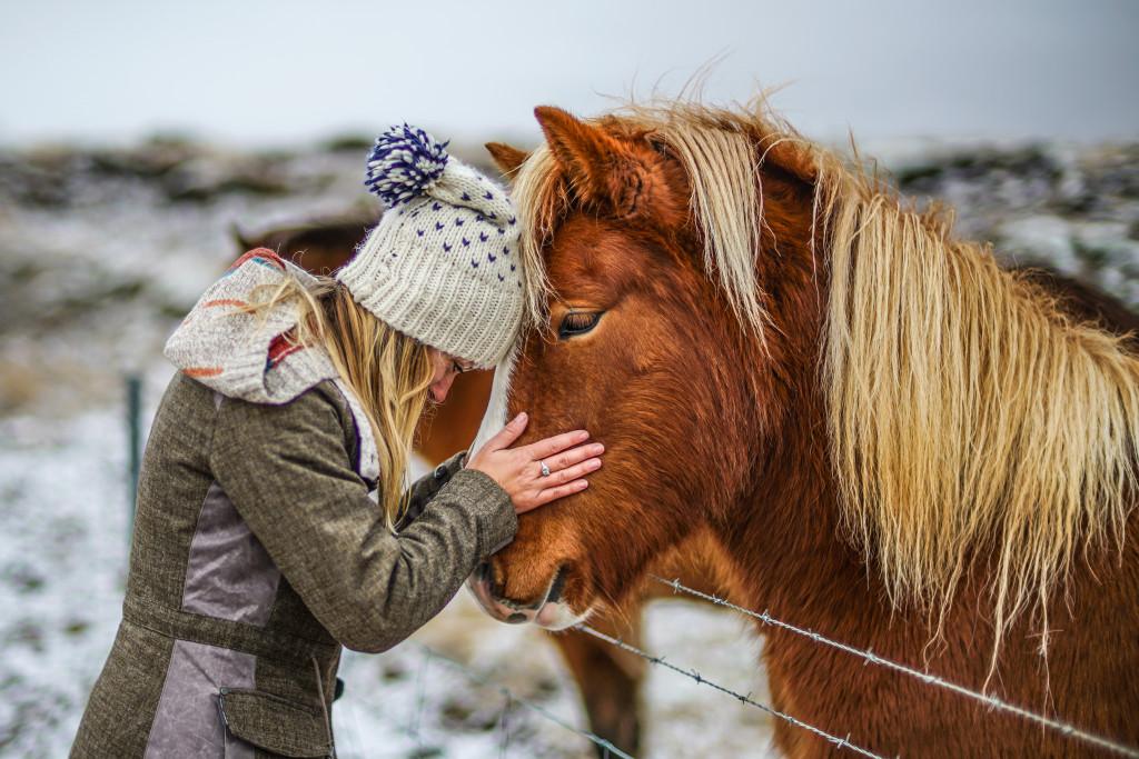 Icelandic Horses - 0006