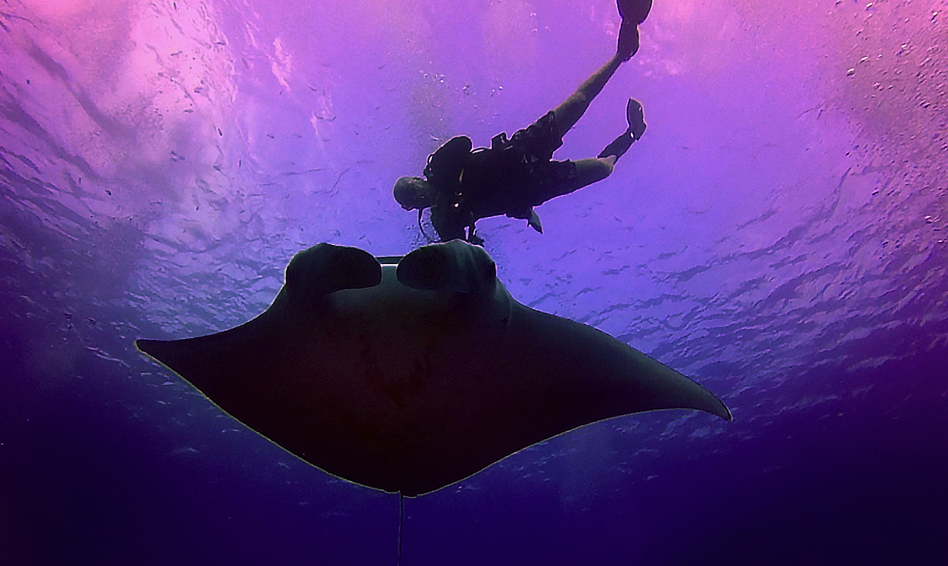 Giant Manta Rays! Thrilling and angelic scuba adventure on the Big Island, Hawaii