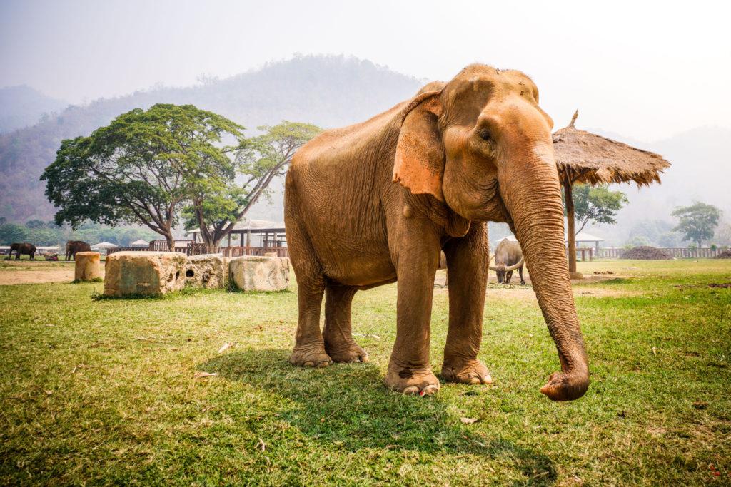 Thailand Elephant Nature Park - 0008