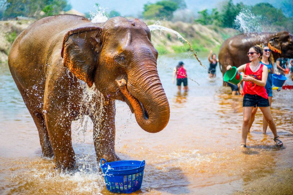 Thailand Elephant Nature Park - 0010