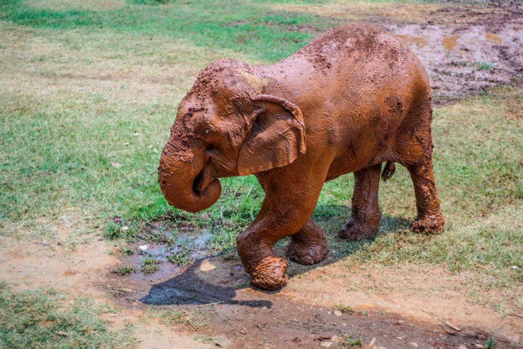 Thailand Elephant Nature Park - 0012